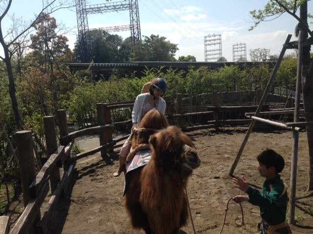 ラクダに乗ってみた!夏の暑さに負けず、動物園へGO!!