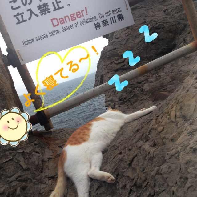 丸ごとまりんぼ☆~江の島にて猫発見の巻~
