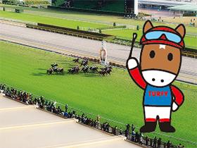 春からの新しい趣味に競馬はいかが?