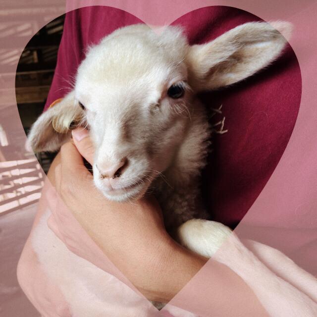 羊をめぐる冒険~北海道・美深町へ~