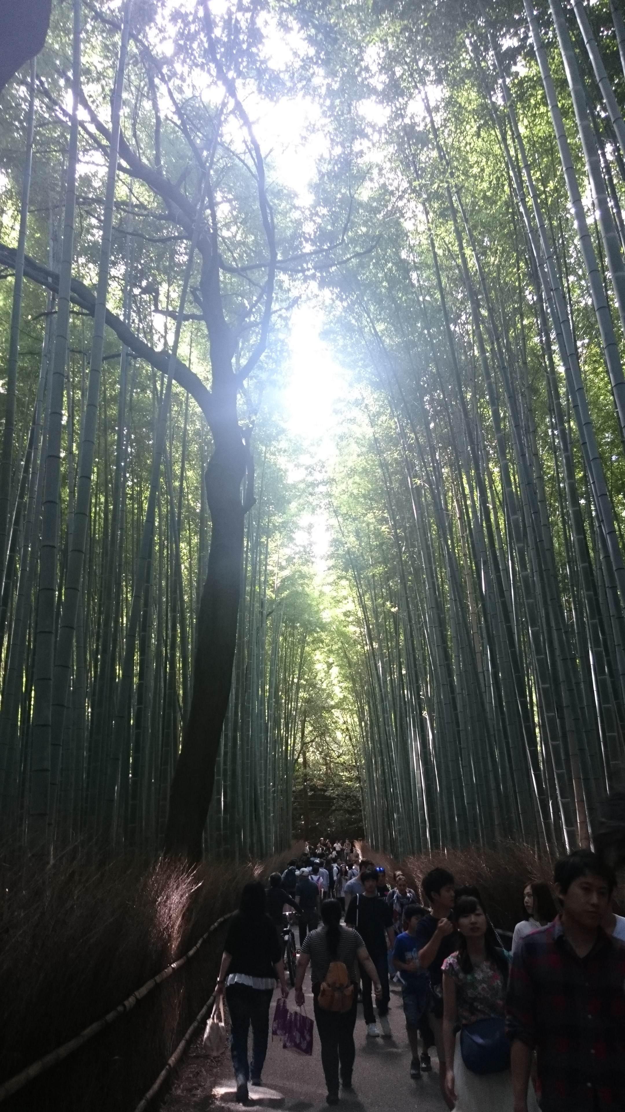 ぶらり、京都旅~‼
