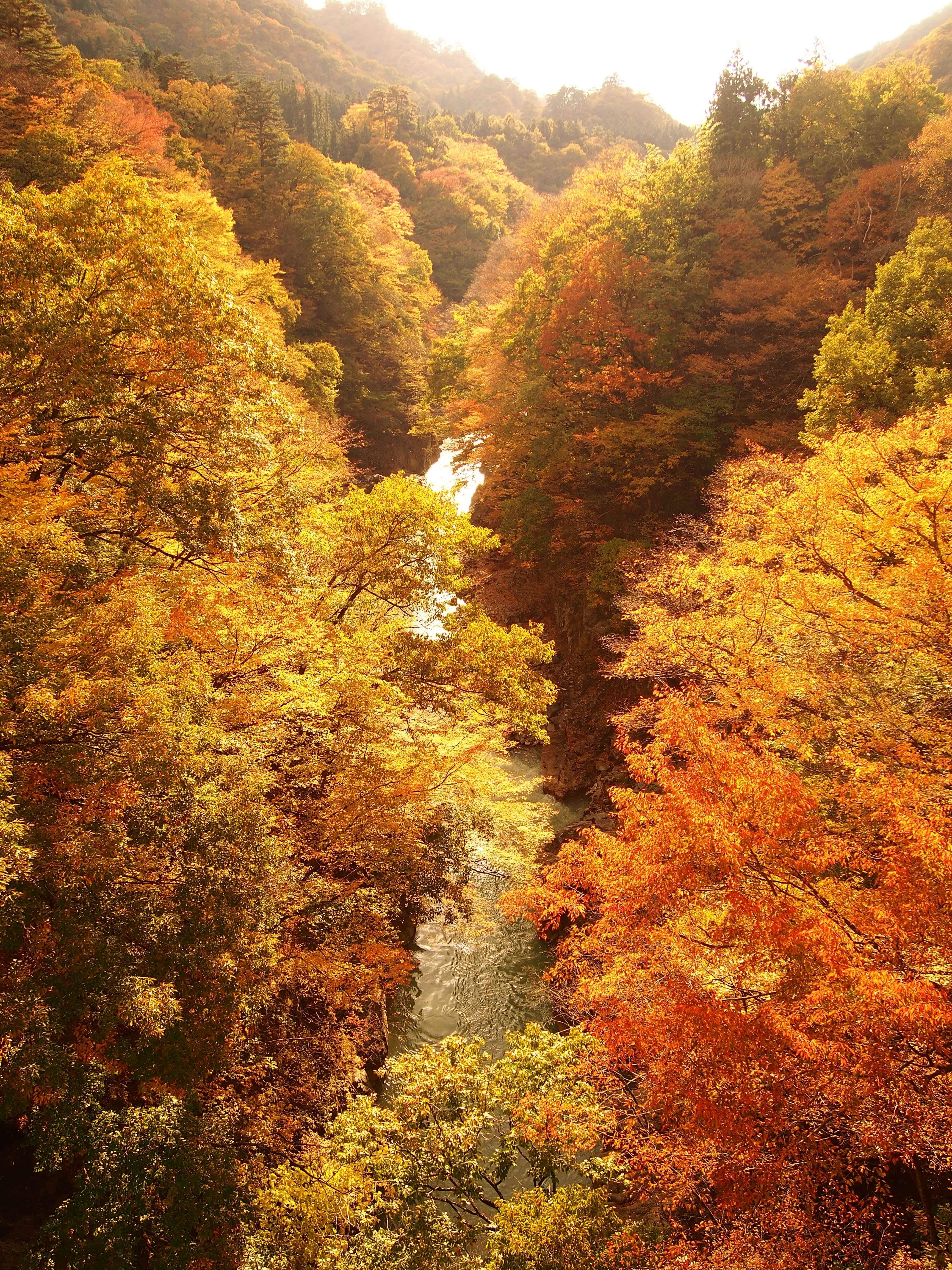 【群馬】ダムに一部沈む『吾妻渓谷』で紅葉ハイキング