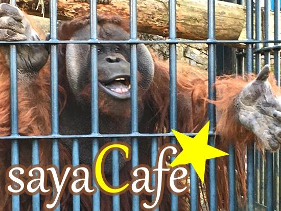 旭山動物園を完全攻略★大人気なのには理由があった!