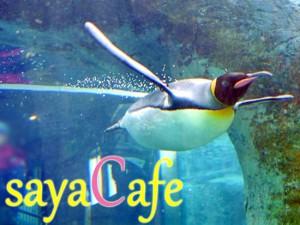 【旭川動物園】驚くほど幻想的!動物園だけど要チェックなペンギン館★