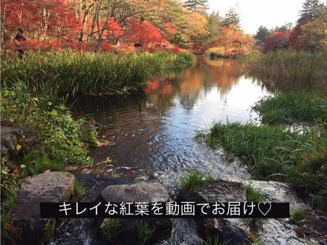 軽井沢、雲場池の紅葉を動画でご紹介♫気になる駐車場の情報も!
