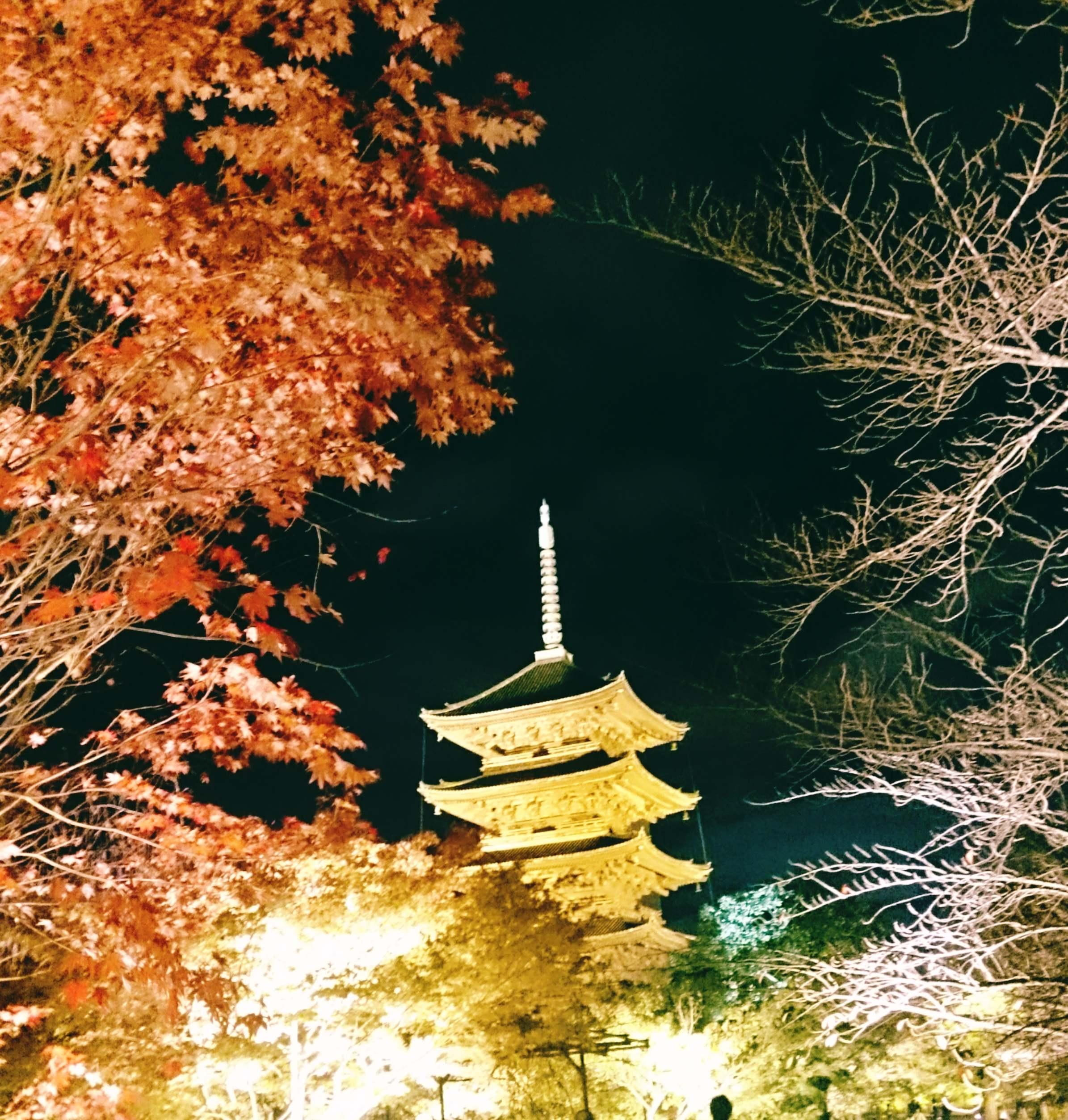 秋の京都!紅葉と世界遺産とグルメの旅