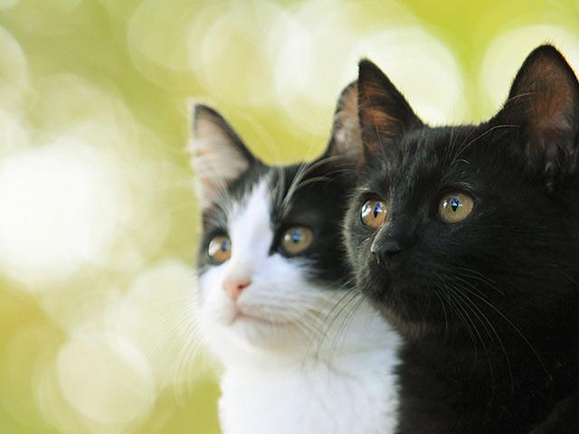 「猫なんかよんでもこない。」「禁じられた歌声」
