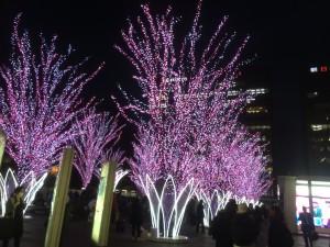 博多駅の桜のイルミ&太宰府天満宮の梅