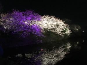福岡城さくらまつり♪