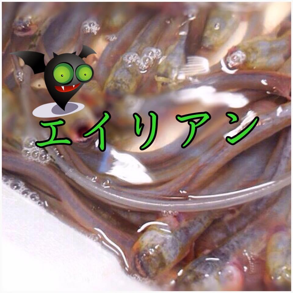 【珍味】有明海のエイリアンを食べてみよう!