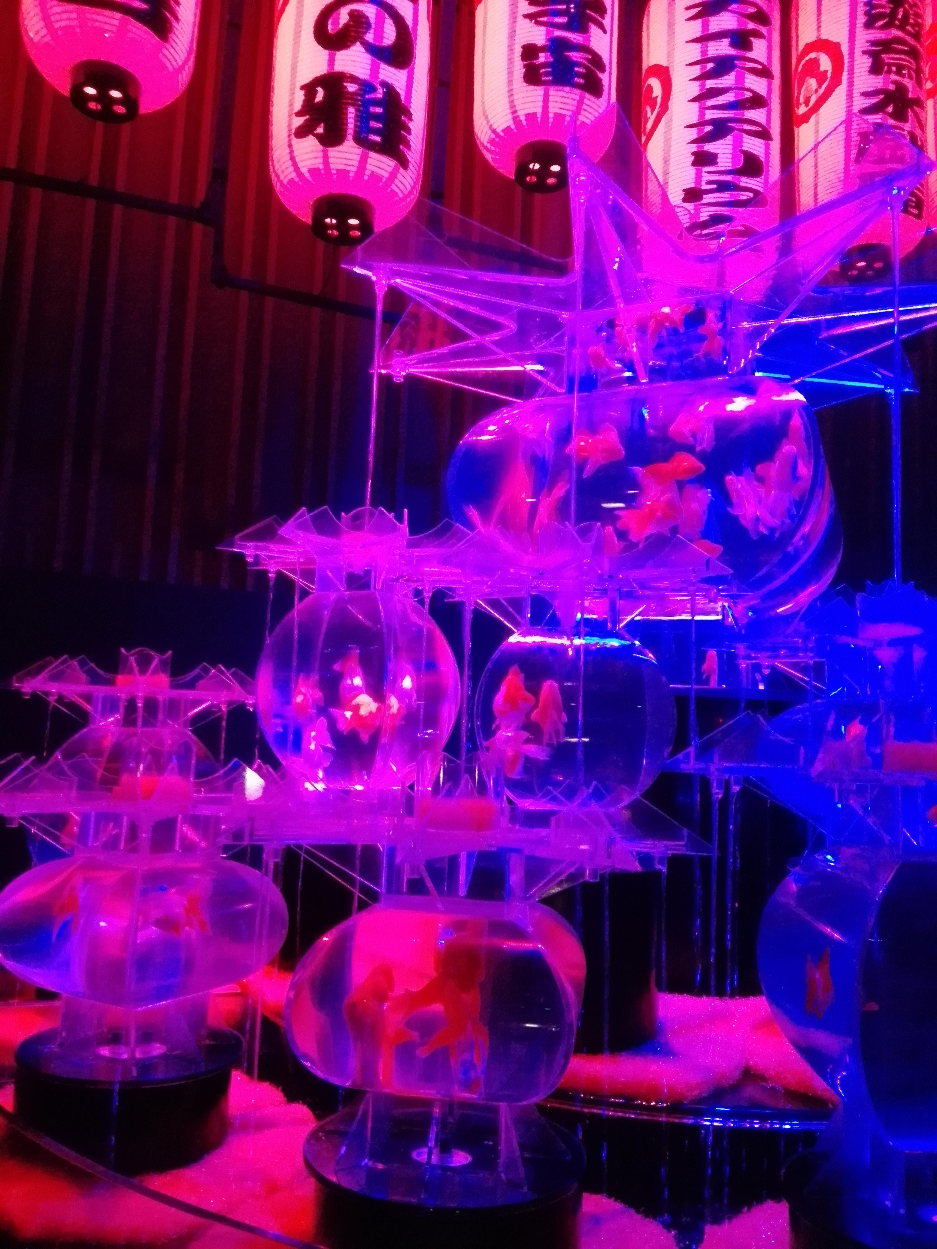 東京・大阪・金沢同時開催♥アートアクアリウムで金魚涼み