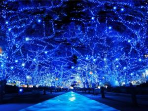 渋谷に表参道…。クリスマスに行きたいイルミネーション・スポット【Inui Ayumi@Get it Beauty】