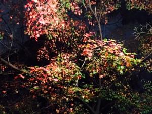 秋の京都は、綺麗、美味しい、楽しい!おすすめのお土産は?