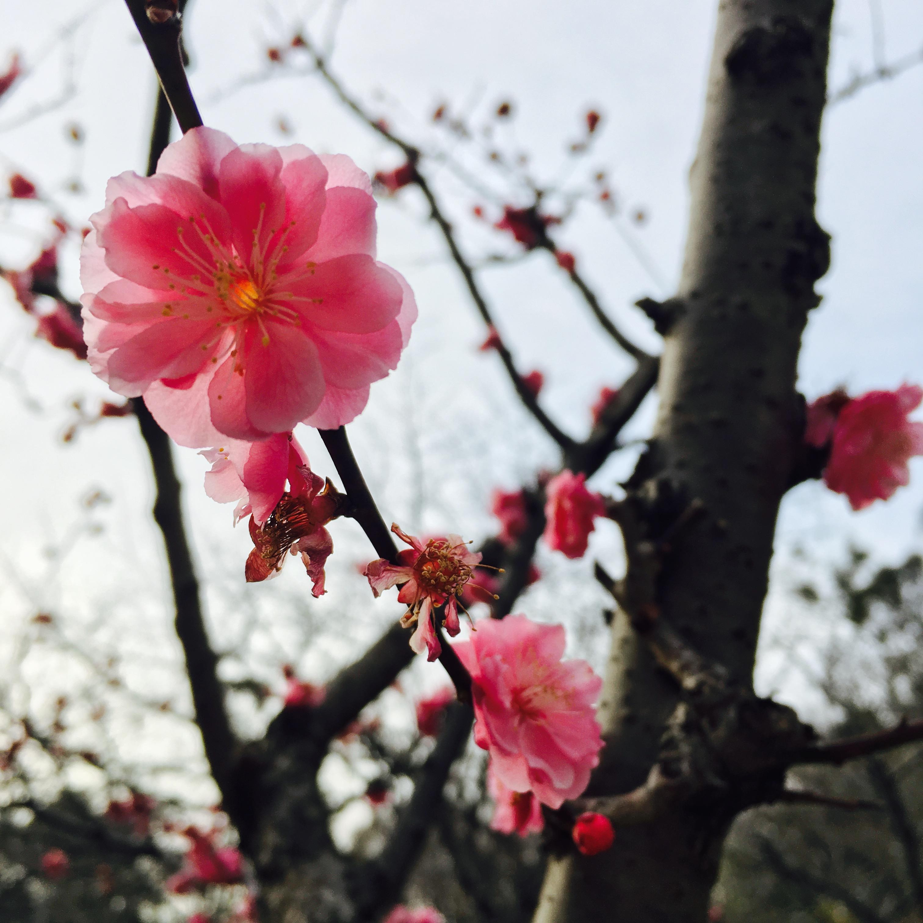 【春】今年初サクラを見ました~♪