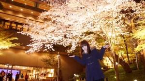 【お花見レポ①2017】夜桜は今が見頃!八芳園の5種の桜がライトアップ