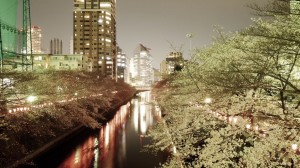 【お花見レポ③2017】東京お花見人気ランキング1位✿目黒川の夜桜♡
