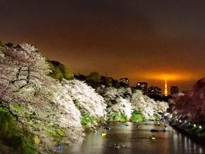 【お花見レポ⑥最終回】2017桜✿来年も行きたいランキングまとめ♡