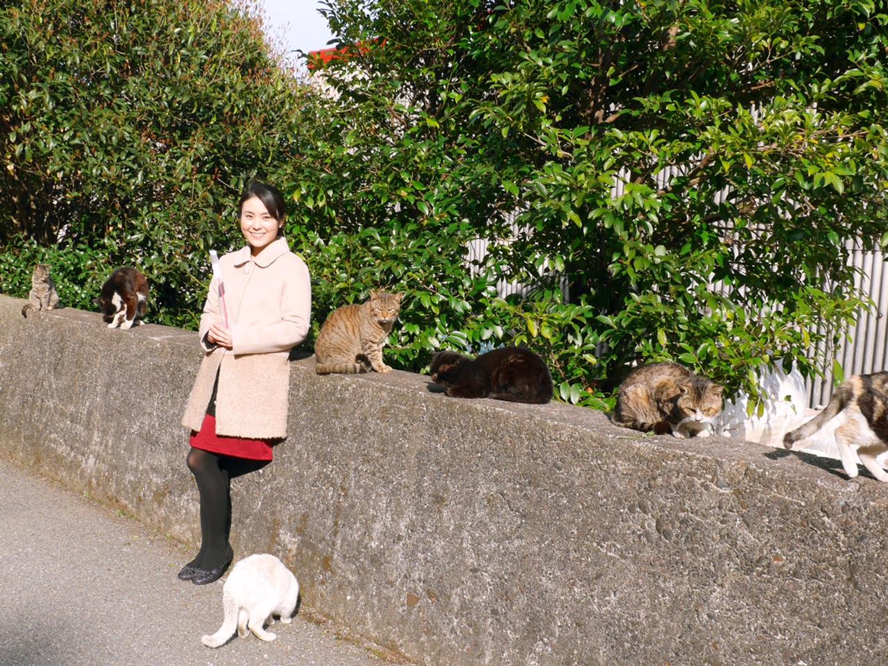 CNN「世界6大猫スポット」に選出!猫好きにはたまらない相島(福岡県)
