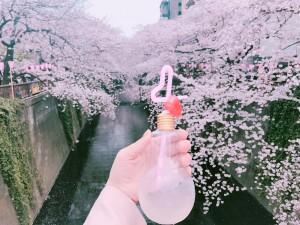 中目黒でお花見!韓国で人気の電球ドリンク!