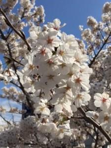 春の信州旅へ♪♪