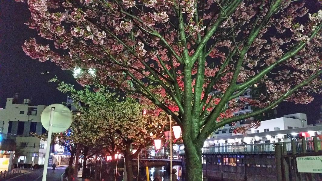 横浜の人に愛される桜名所、大岡川プロムナード★私の街のおすすめスポット