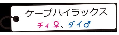 ケープハイラックス/チィ♀、ダイ♂