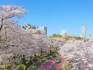 """お花見シーズン到来! 六本木、代々木、飯田橋にある""""夜桜""""の新スポットを厳選"""
