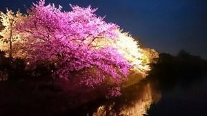 おでかけ部 ~福岡城さくらまつりに行ってきました!~