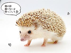 """買わずに""""ちょっといい""""暮らし レンタル&シェア"""