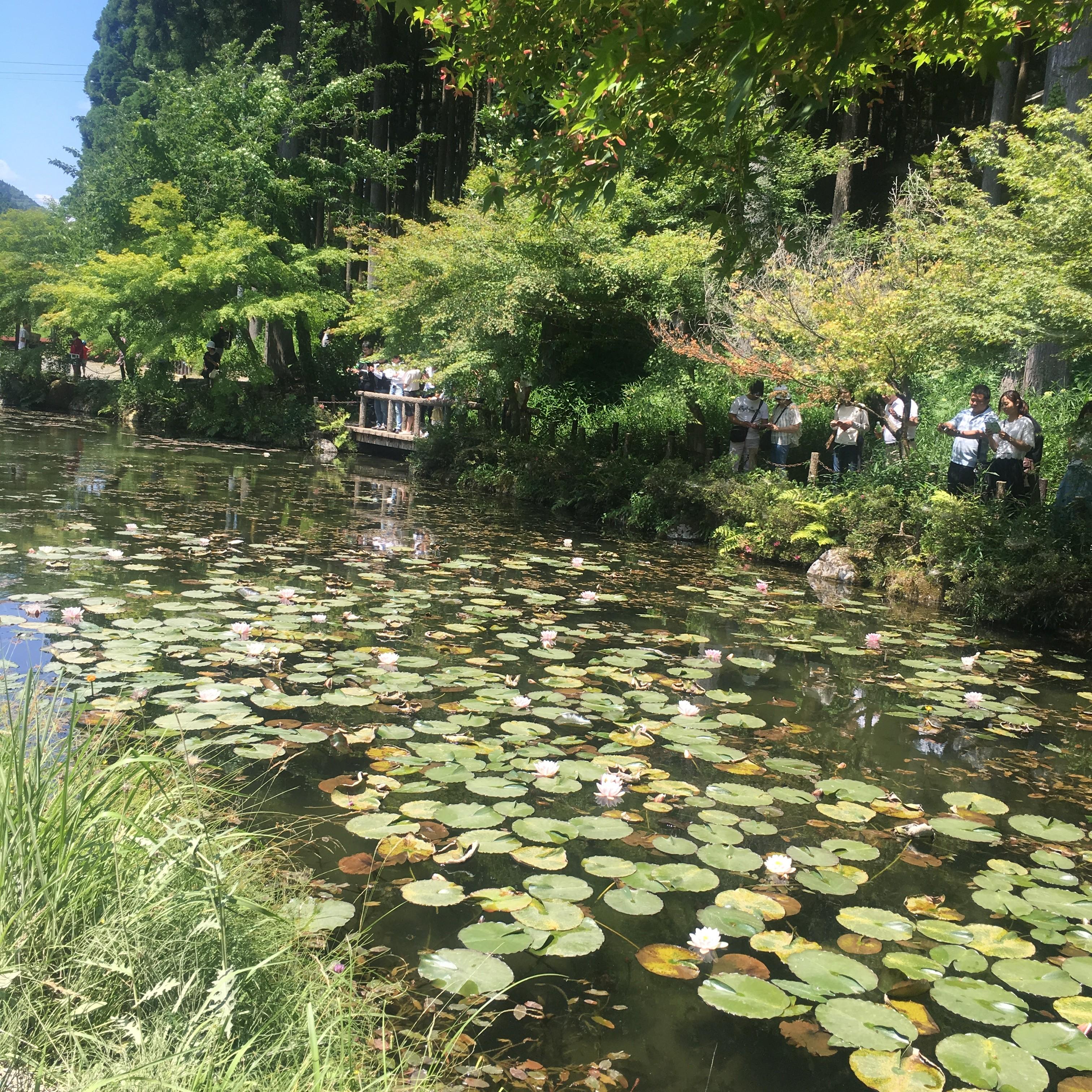 鮎づくしにモネの池!!!板取川へ