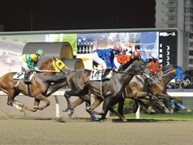 【シティ読者特典付き】夏のナイター競馬で 迫力あるレースを体感!