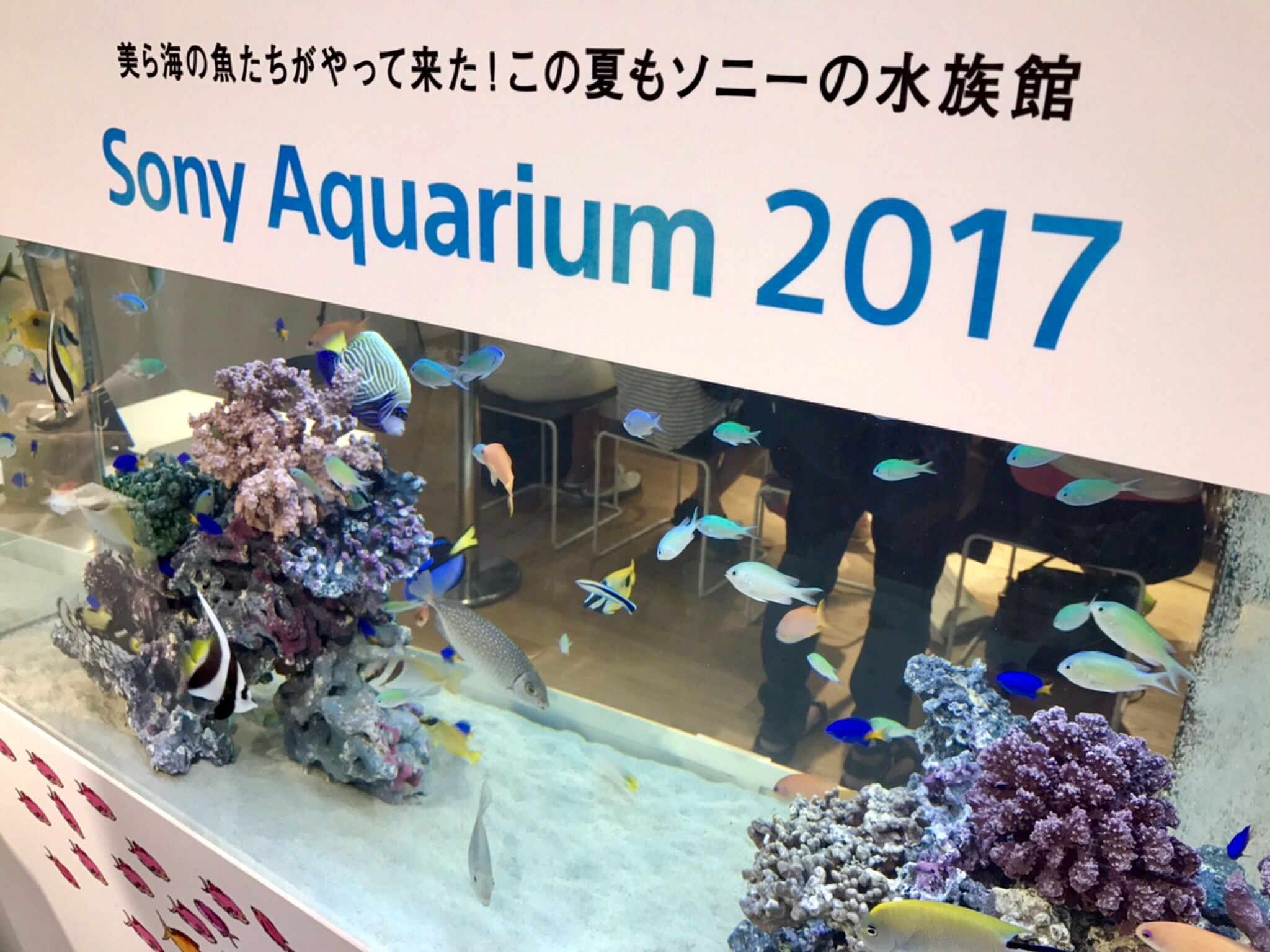 銀座で美ら海水族館の仲間に会いました!