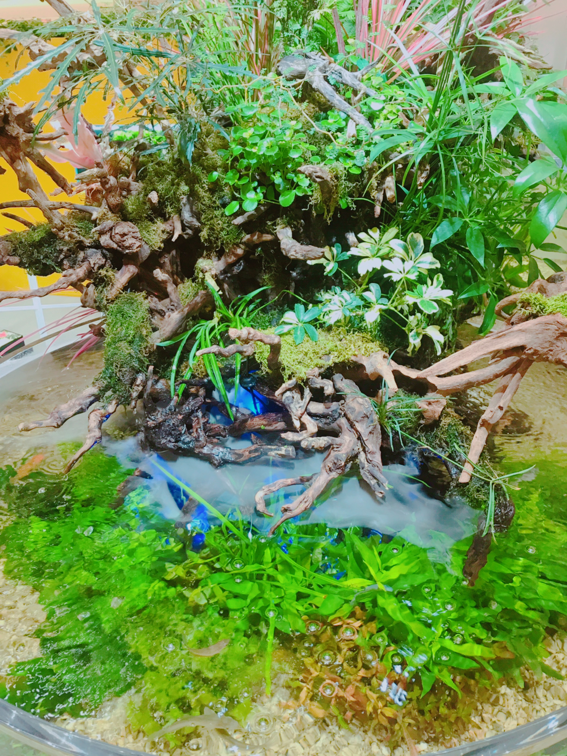 グランツリー武蔵小杉【グリーンアクアリウム展】
