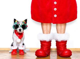 クリスマスは日曜のサザエさんに…アラフォーが考える年代別クリスマス