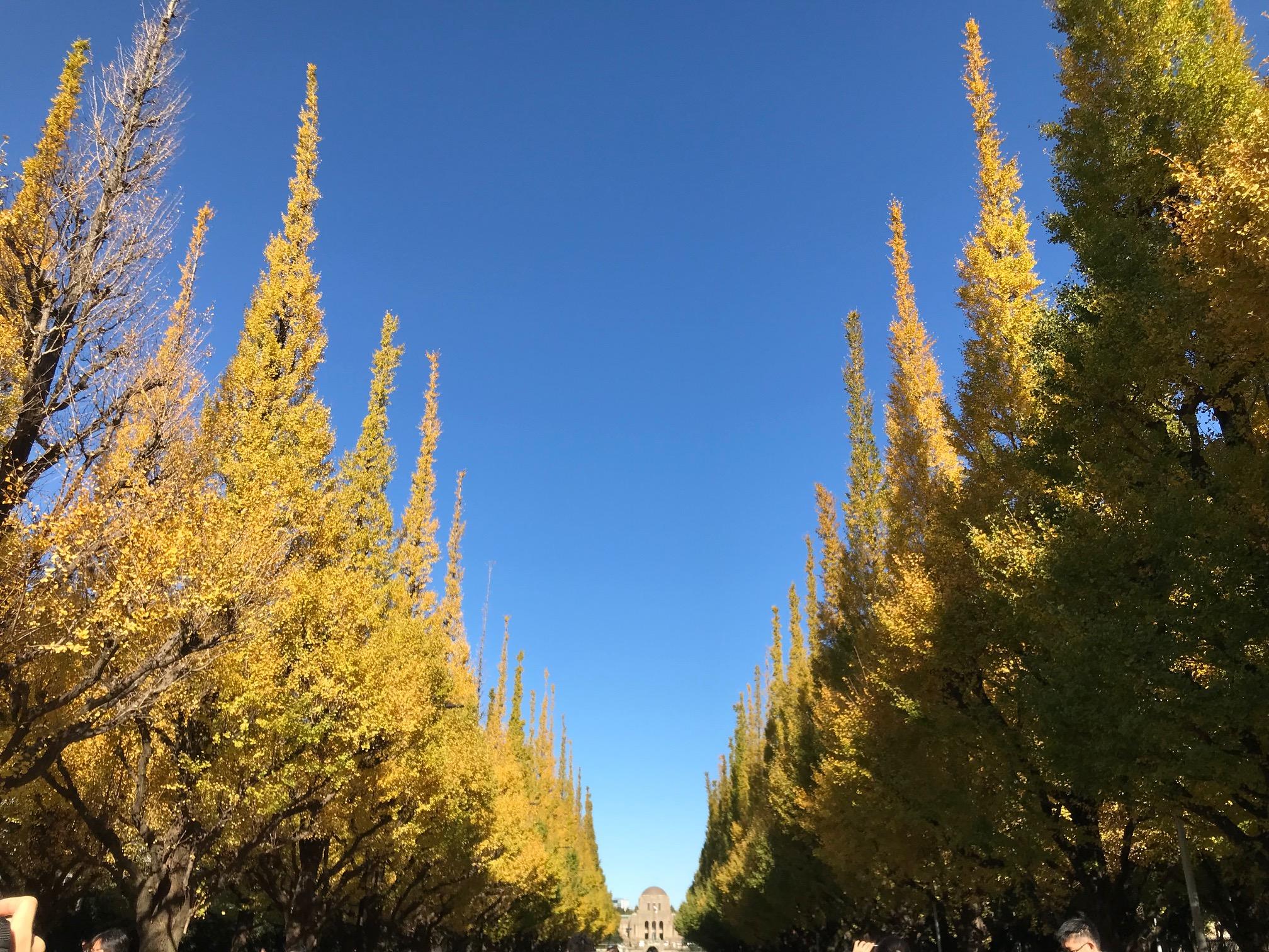神宮外苑のイチョウ並木が見ごろ!!!渋谷で紅葉を楽しもう♪