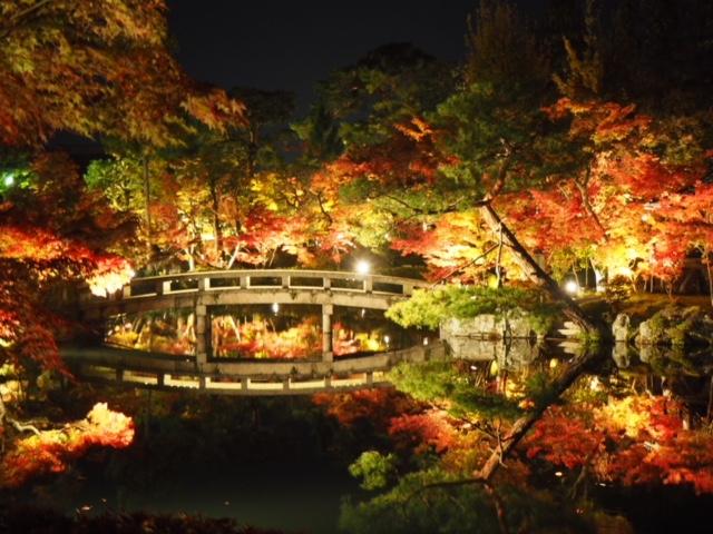 【秋旅】今が見頃!秋ならではの京都紅葉ライトアップ編~京都ひとり旅①~