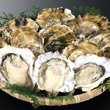 【394】今が旬! 「豊前海一粒牡蠣」1/30(火)