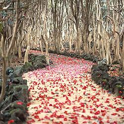 【409】萩へ~早春の花と歴史旅2/22(木)