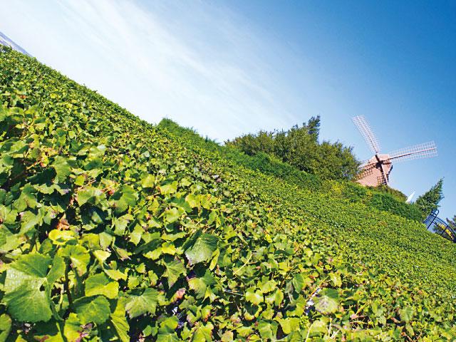 【vol.4 フランス】世界遺産、ワイン、美の殿堂… まだ見ぬ地を巡る旅へ