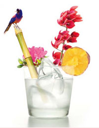 鹿児島が誇る69の蔵元の美酒を楽しめるフェス、3/13(火)に恵比寿で開催