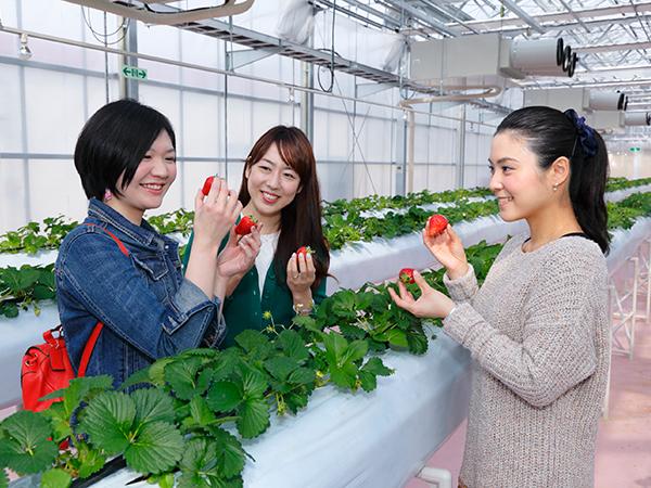 横浜の「TOKYO STRAWBERRY PARK」で一年中イチゴ狩りを