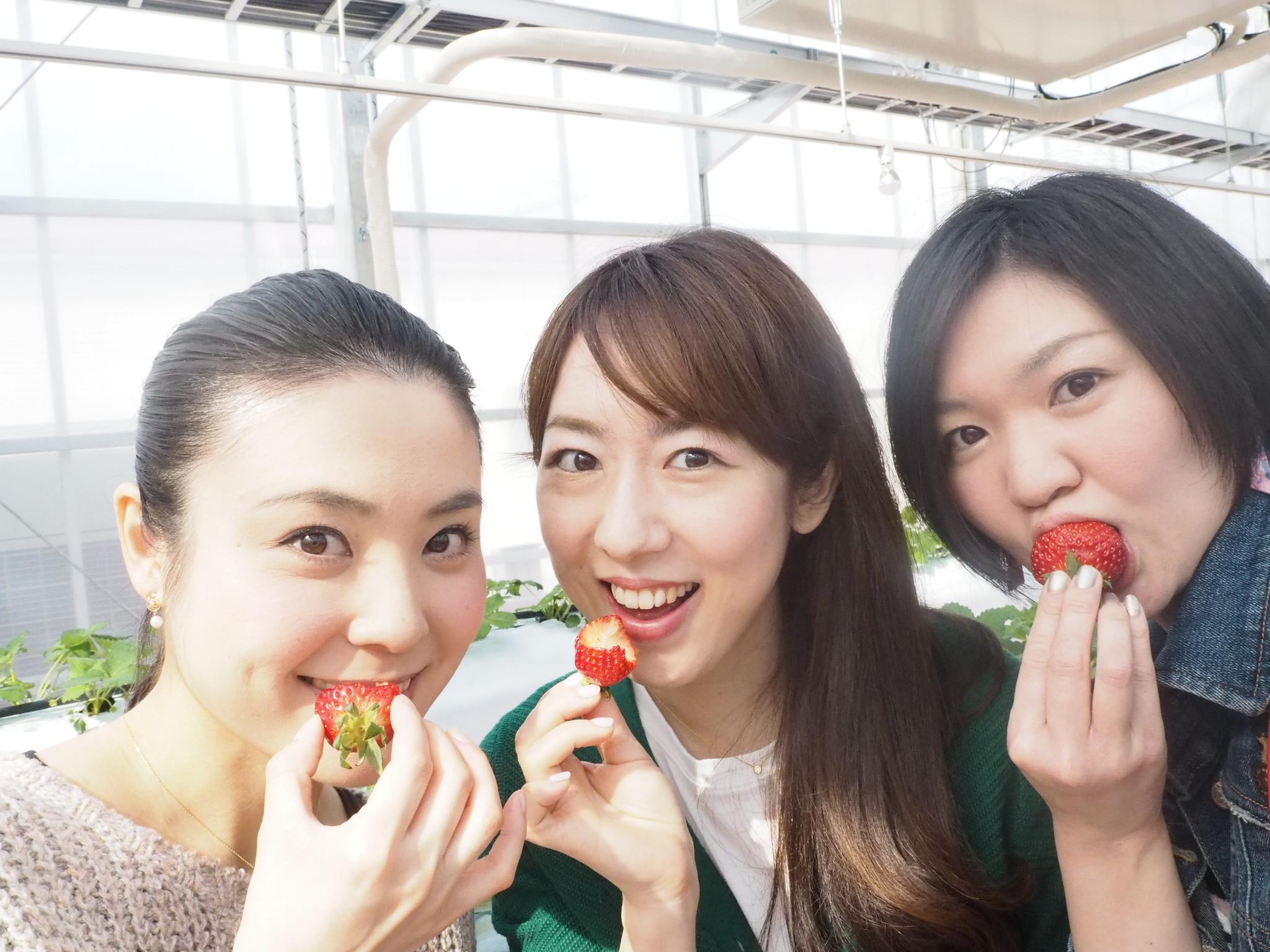 4月29日OPEN!1年中イチゴ狩りできる『東京ストロベリーパーク』