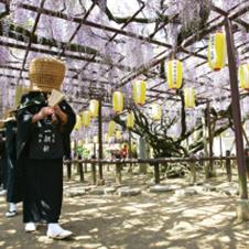 【476】定禅寺の藤まつりと芝桜4/29(祝・日)※残席わずか