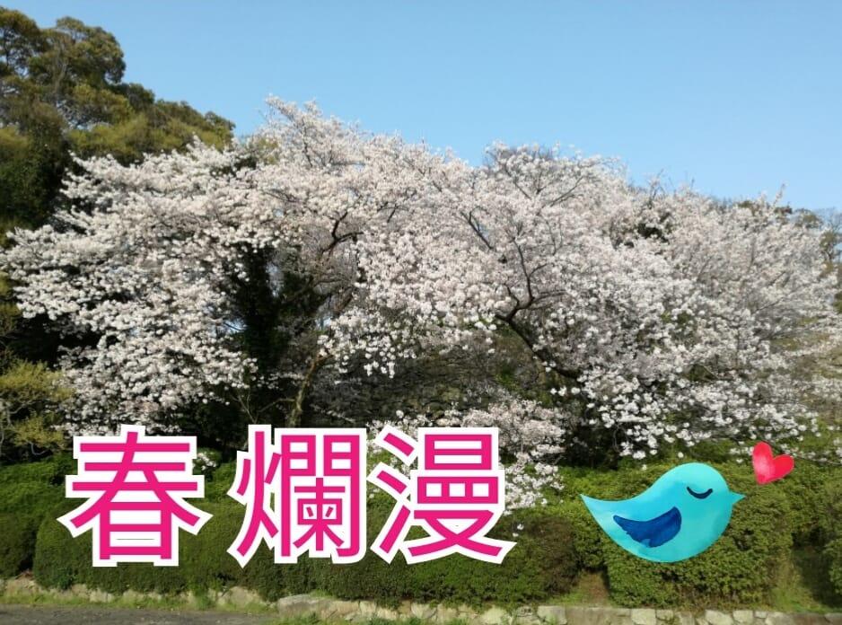 福岡も春爛漫♡出産前のお花見♪