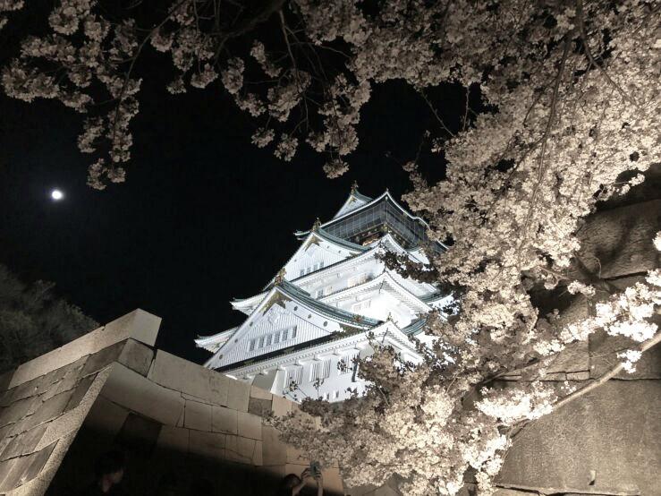 お花見☆大阪城公園で観桜ナイター