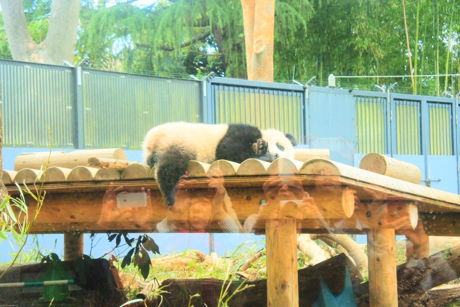 整理券は先着順に!上野動物園の赤ちゃんパンダ・シャンシャンに会ってきた