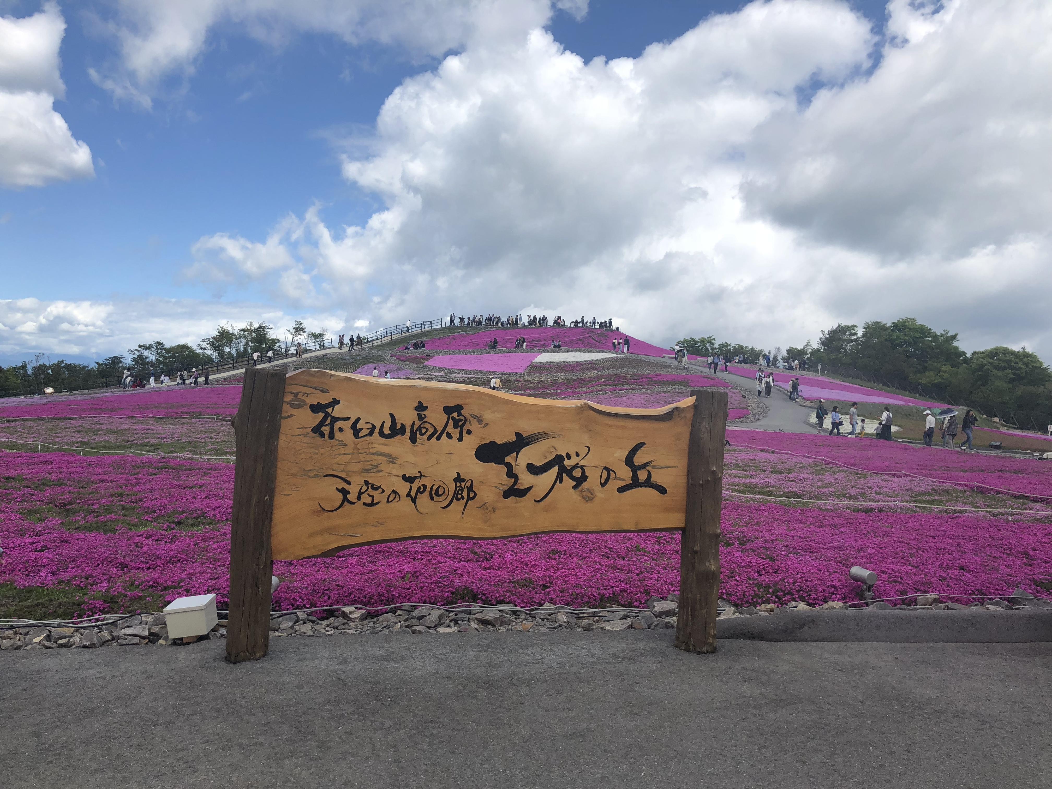 芝桜観賞でリフレッシュ♥愛知県茶臼山へ