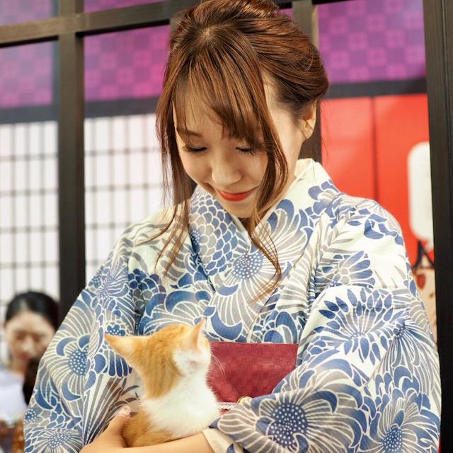 猫好きな方必見‼江戸版ねこカフェが期間限定でオープンします♡