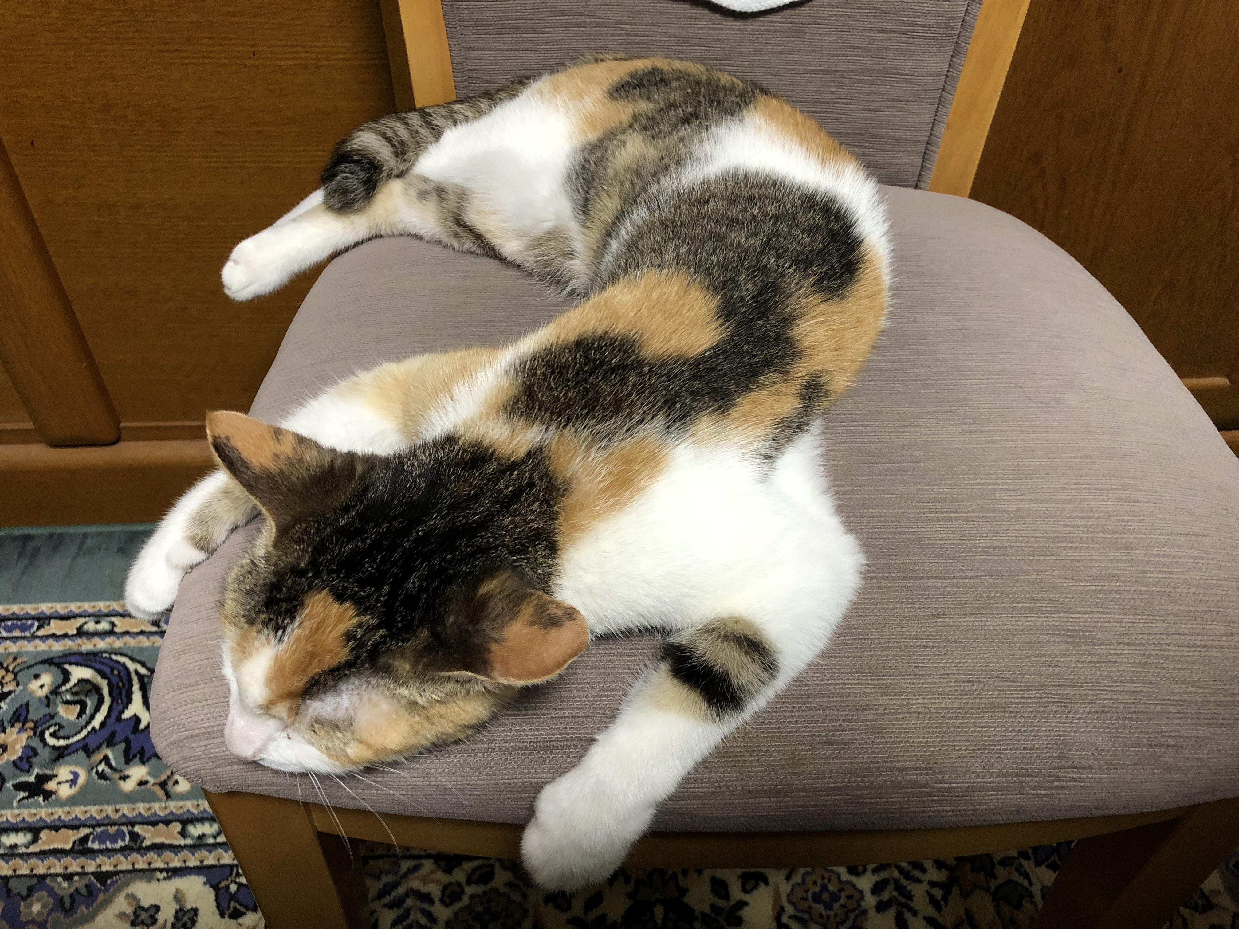 にゃんともカワイイ♪♪猫好きには堪らない「福ねこ弁当」