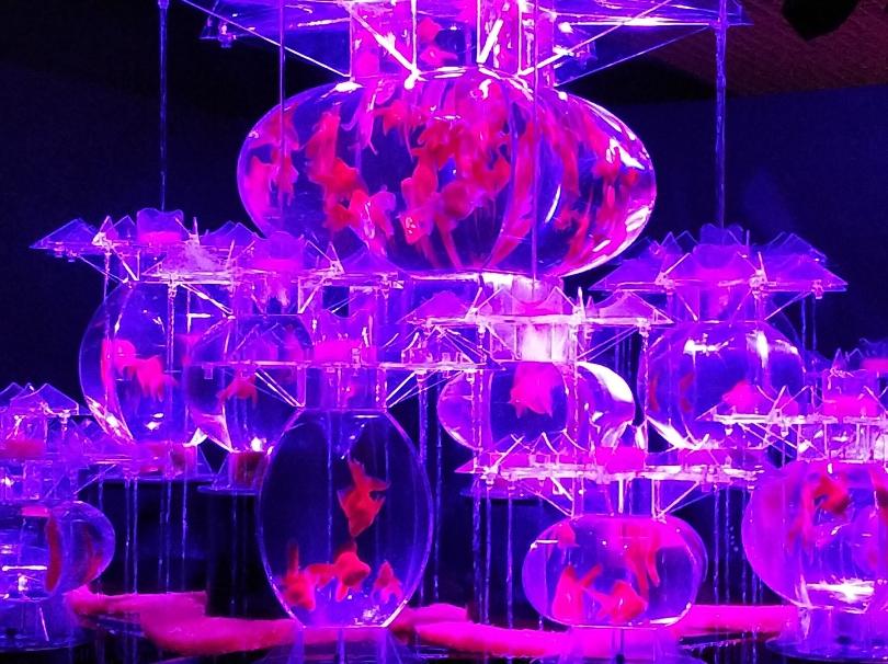 雅な金魚の世界☆アートアクアリウム展【松坂屋名古屋】